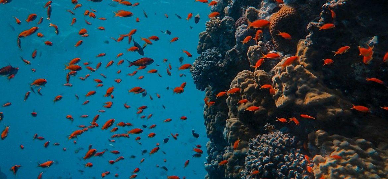 underwater-5310424_1920